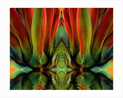 Inside a Flower by Corbis