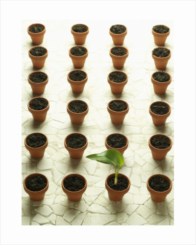 Rows of Pots and One Plant by Corbis