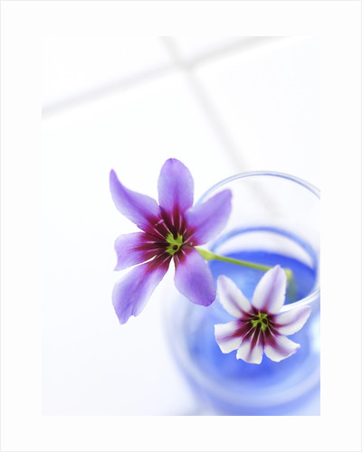 Cut Flowers in Vase by Corbis