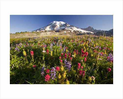 Mount Rainier and Wildflowers by Corbis