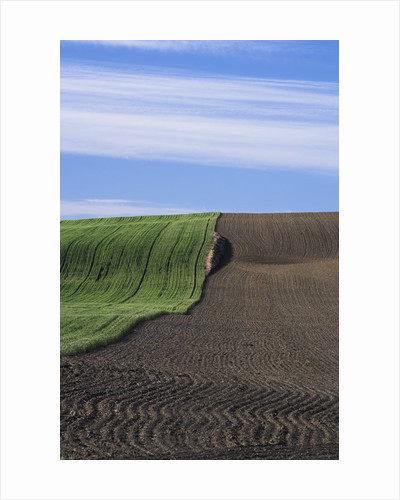 Wheat Field and Plowed Land by Corbis