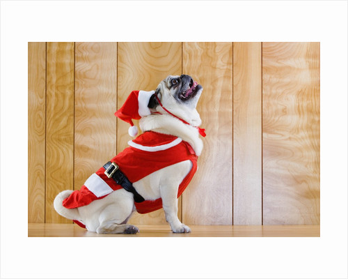 Dog in Santa Suit by Corbis