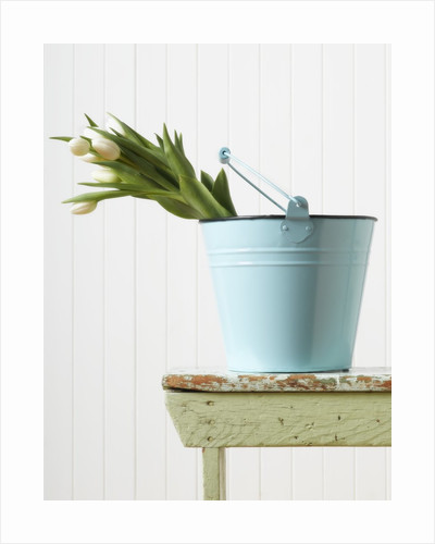 Bouquet of White Tulips in Bucket by Corbis