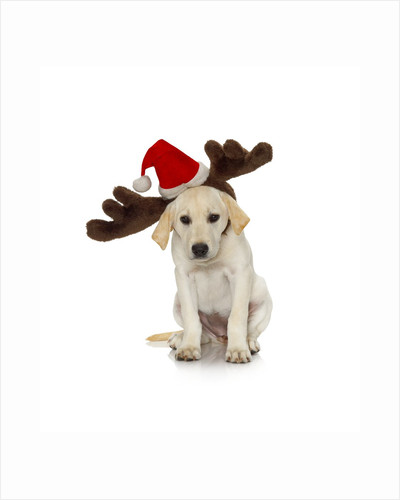 Puppy with Santa Hat and Reindeer Ears by Corbis
