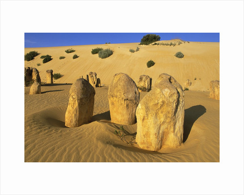Limestone Pillars in Australian Desert by Corbis