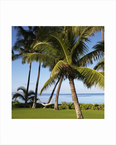 Hammock Between Two Palms by Corbis