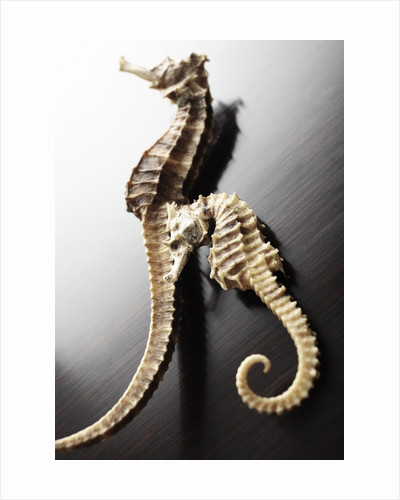 Dried Seahorses by Corbis