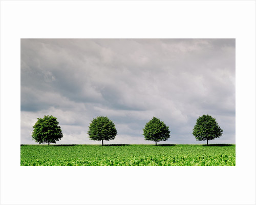 Cloudy Sky and Row of Trees in Countryside by Corbis
