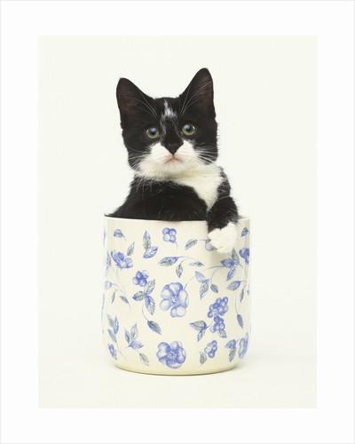 Black and White Kitten Sitting in Ceramic Jar by Corbis
