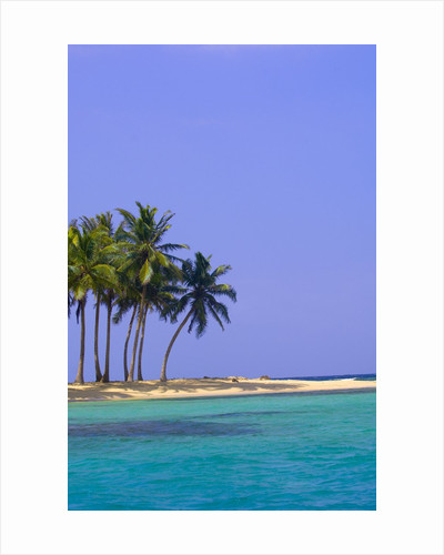 Palm Trees on Pelican Island by Corbis