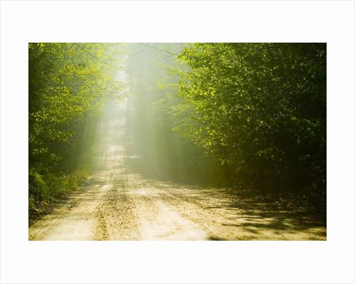 Rural Road by Corbis