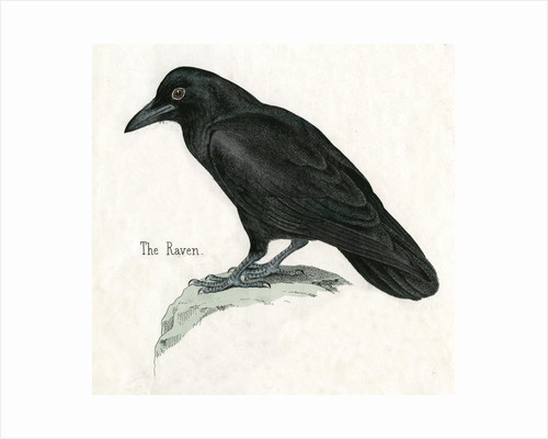The Raven Illustration by Corbis