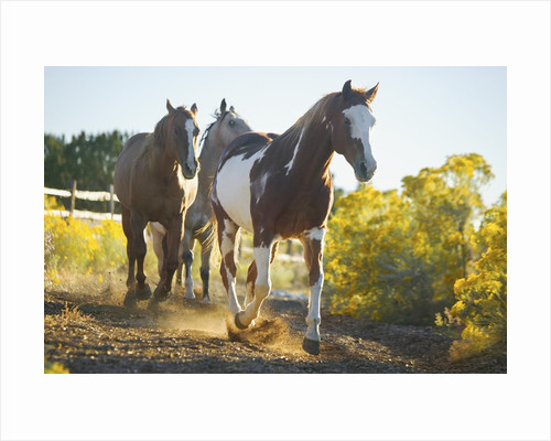 Horses on Path by Corbis