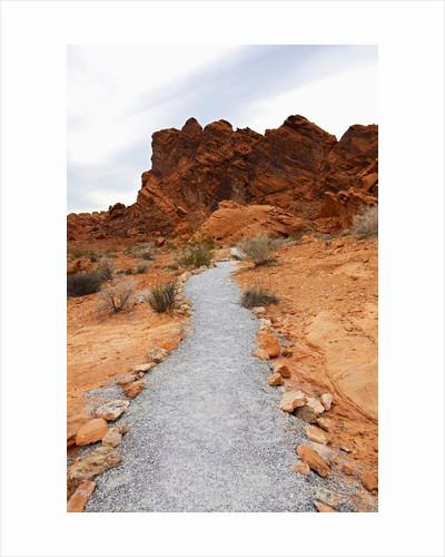 Rural Trail Through Desert by Corbis
