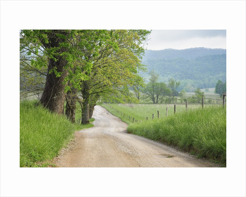 Rural Road in Cades Cove by Corbis