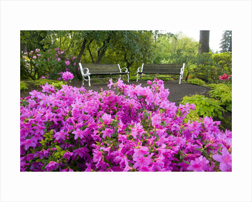 Benches Set amid Rhododendrons by Corbis