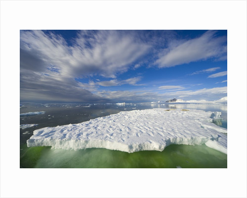 Crabeater Seals on Ice Floe at Holtedehl Bay by Corbis
