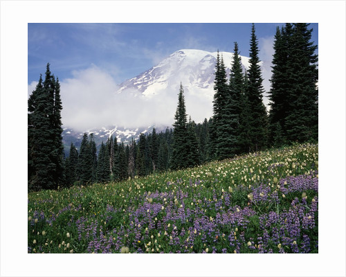 Wildflowers at Paradise Meadow by Corbis