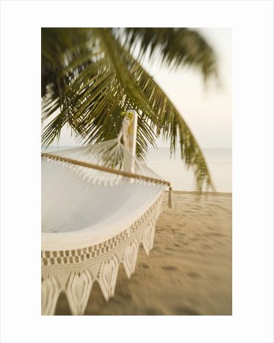 Woven Hammock under Palm Tree by Corbis