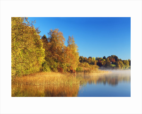Fall Color and Misty Lake by Corbis