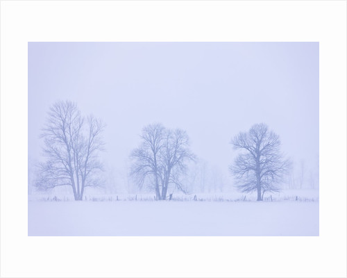 Trees and Fence in Field by Corbis