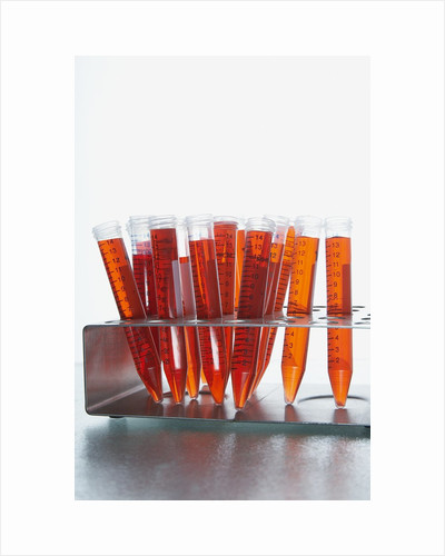 Test tubes filled with orange liquid by Corbis