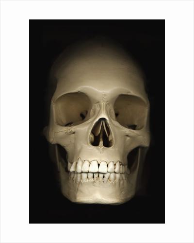Human skull by Corbis