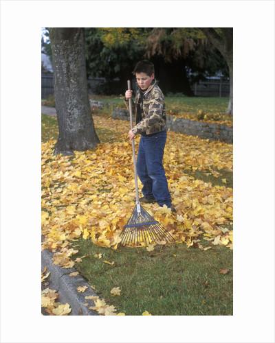 1970s 1980s Teenage Boy Raking Autumn Leaves by Corbis