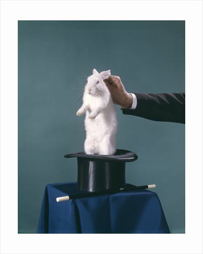White Rabbit Being Pulled Out Of Silk Top Hat By Hand Of Magician by Corbis