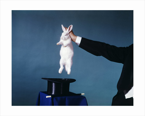Hand Of Magician Pulling White Rabbit Out Of Black Silk Top Hat by Corbis