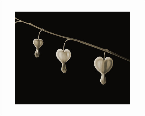 Bleeding Hearts by Tom Marks