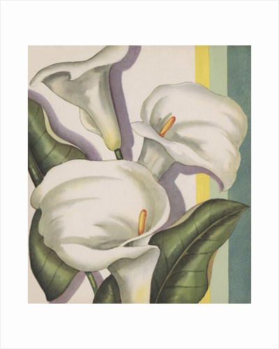Illustration of Calla Lilies by Corbis
