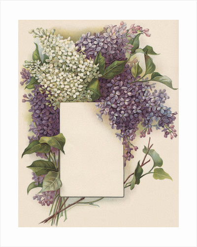 Victorian Illustration of Lilac Border by Corbis