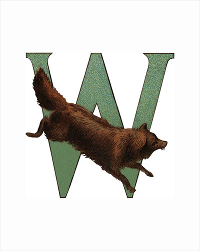 W Is For Wolverine Illustration by Corbis