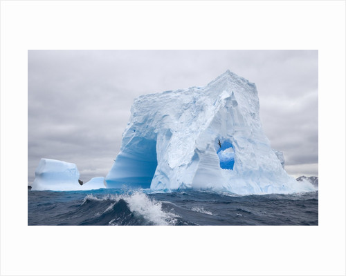 Blue Iceberg Sculpted by Waves and Southern Giant Petrel in Flight by Corbis
