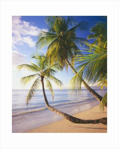Pigeon Point Beach, Island of Tobago by Corbis
