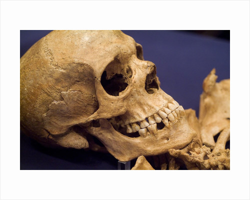 Skull of Early Settler by Corbis