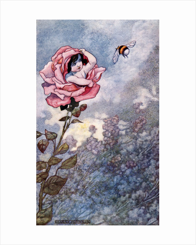 Illustration of Child Hiding in Rose by Charles Robinson