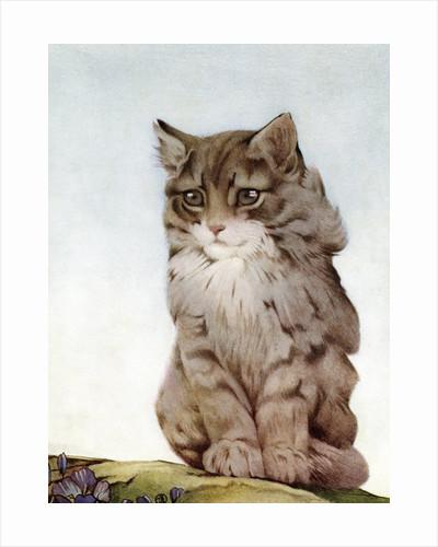 Illustration of Kitten by Edward Julius Detmold