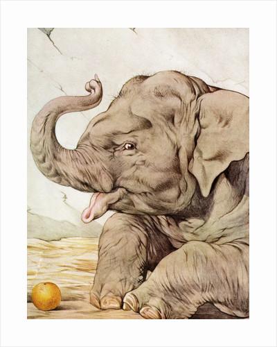 Illustration of Elephant by Edward Julius Detmold