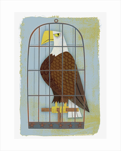 Bald Eagle Confined in Small Cage by Corbis