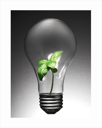 Plant in Lightbulb by Corbis