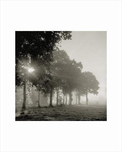 Sun shining through morning mist by Corbis