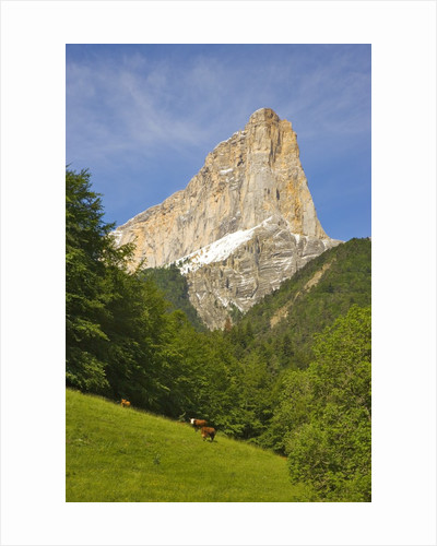 Cattle grazing at the foot of Mont Aiguille by Corbis