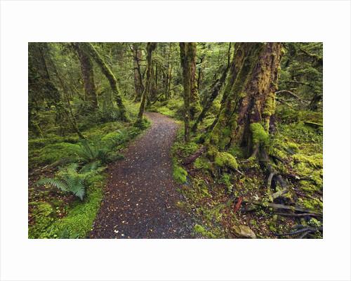 Lake Gunn Nature Walk trail in Fiordland National Park by Corbis