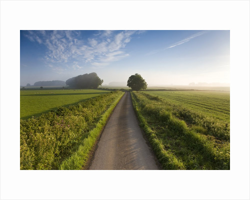 Country road between agricultural fields in England by Corbis