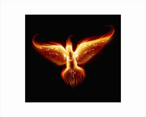 Phoenix by Corbis