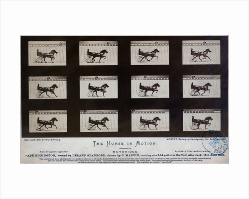 The Horse in Motion by Eadweard Muybridge