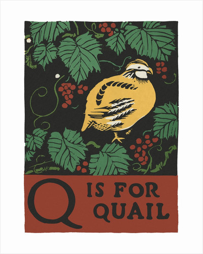 Q is for quail by Corbis