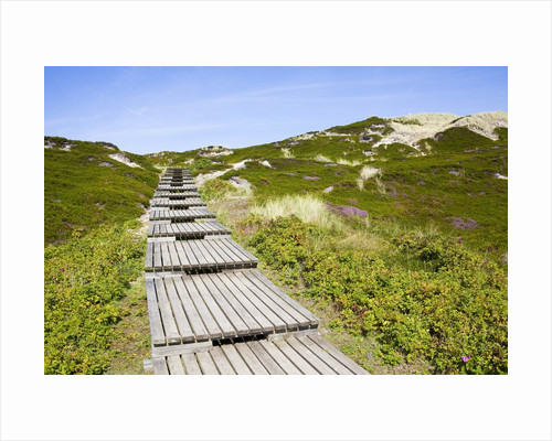 Wooden walkway through vegetation covered sand dunes by Corbis
